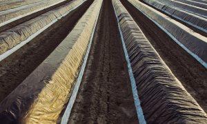 Agrofólia a mezőgazdaságban