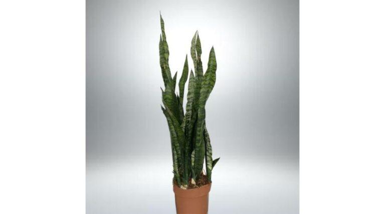 A tökéletes harmóniáról az árnyéktűrő növények gondoskodnak